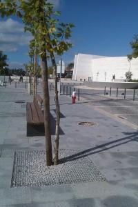 plantacoes avenida