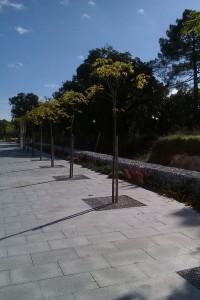 plantacoes avenida3